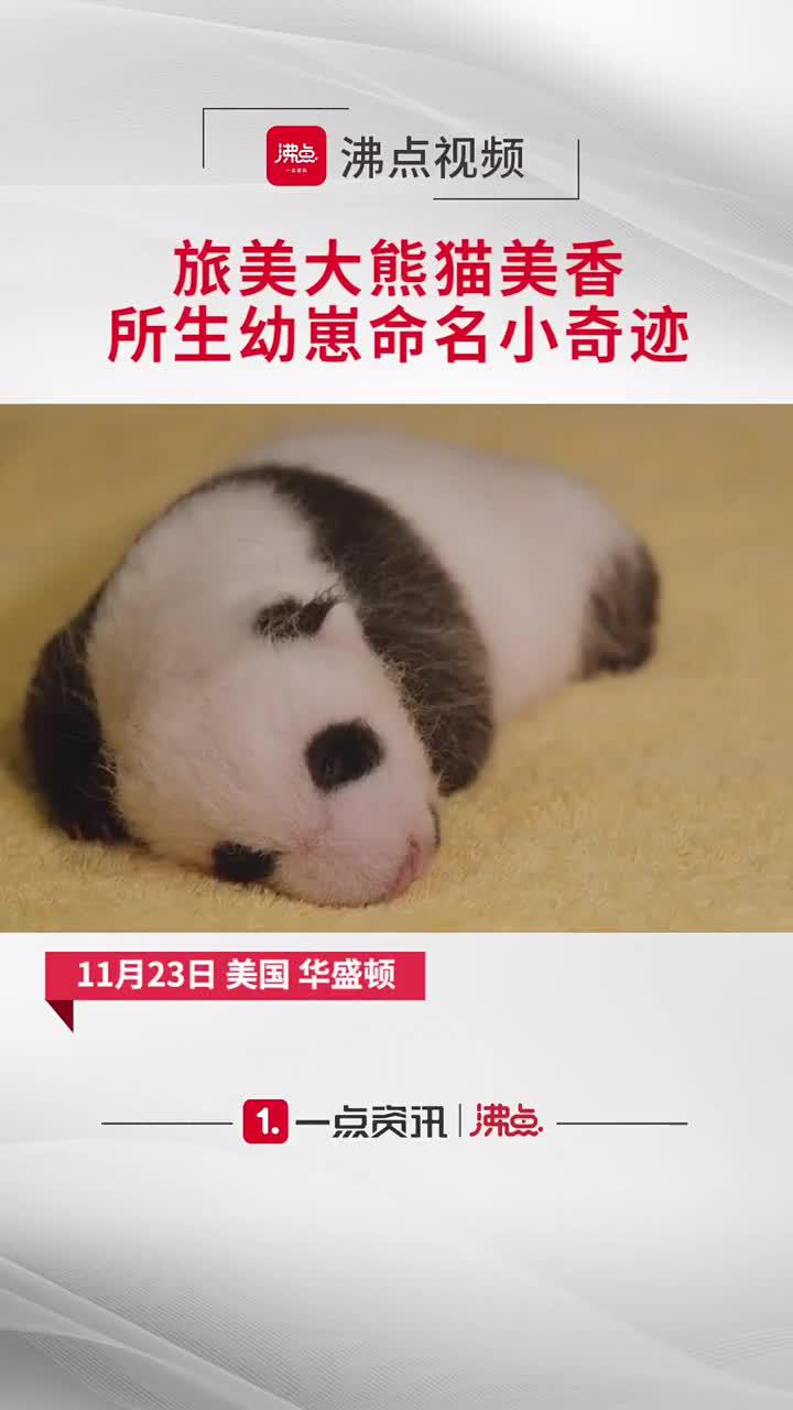 当地时间11月23日,美国华盛顿国家动物园宣布…………