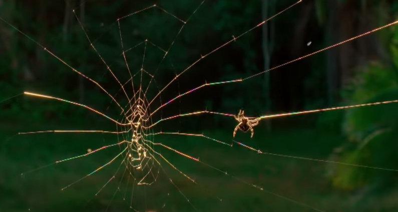 跟孩子一起看+蜘蛛射出25米长的网