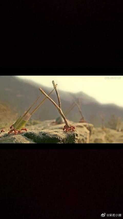 黑蚂蚁与红蚂蚁军事化作战,什么武器都有,昆虫总动员