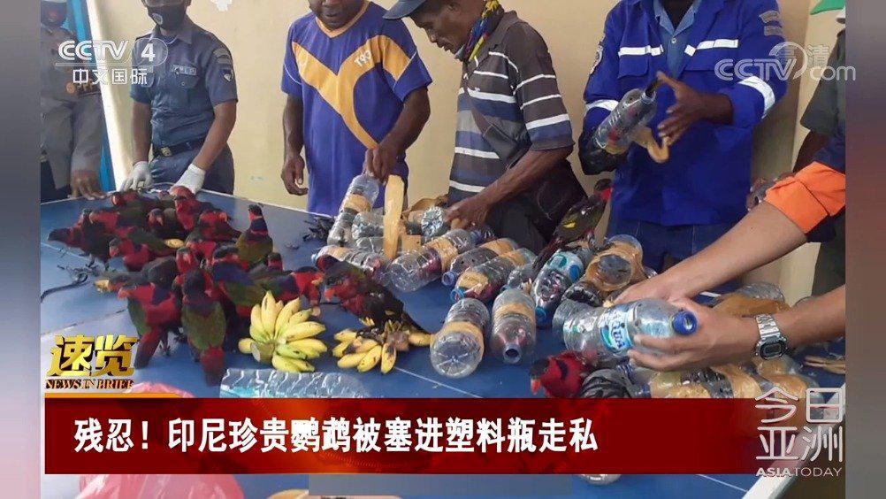 残忍!印尼珍贵鹦鹉被塞进塑料瓶走私