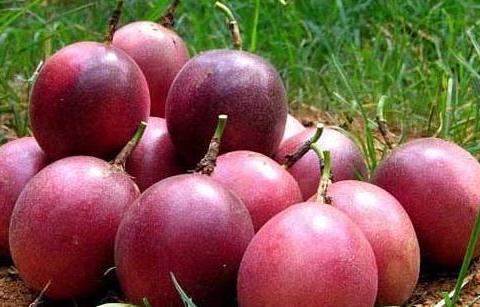 女人排毒不到位,此种水果每天食2个,改善皮肤,还能降脂抗衰老