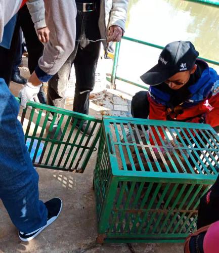 富民县林业和草原局与森林警察大队共同救助平顶猴