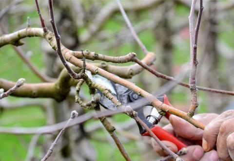 果树叶片脱落之后,树液还会向根系回流吗?不,营养依然循环