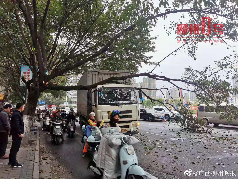 西江路货车撞断大树枝,树枝砸中车头,正逢早高峰,附近大拥堵