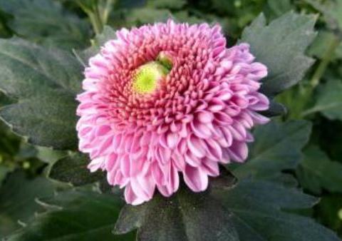 新手养护花卉,就养花色艳丽的花卉,花期长,适合盆栽养!
