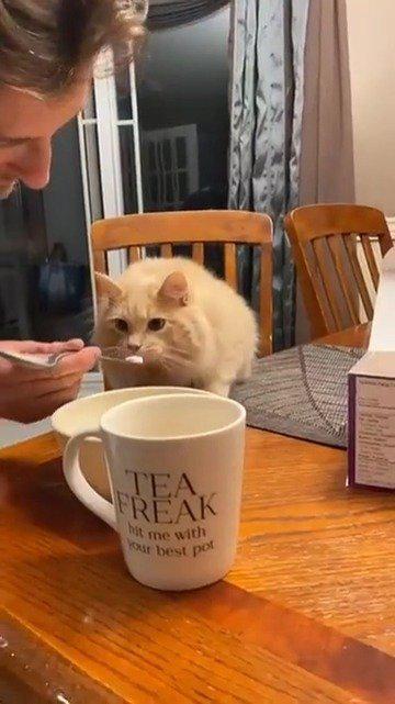 第一次吃冰激凌的猫猫