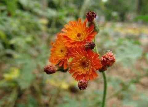 新手养护花卉,就养色彩明快,植株矮小适合盆栽养的花卉,喜庆!