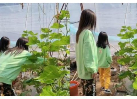 李小璐带女儿摘草莓,画面温馨,网友:甜馨穿这样真的好吗