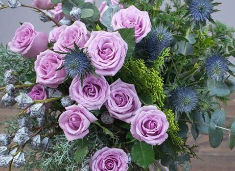 新手养护花卉,就养花色浅紫雅致的花卉,观赏价值极高!
