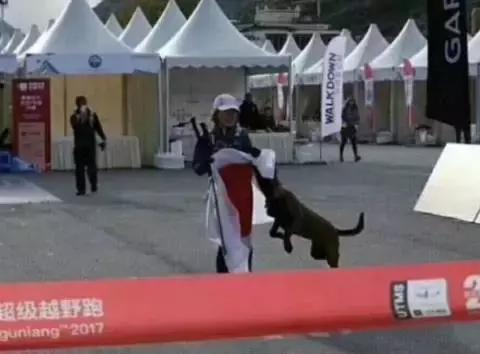 日本运动员披国旗冲线,被中华田园犬扑过去抢走,网友:尴尬了!