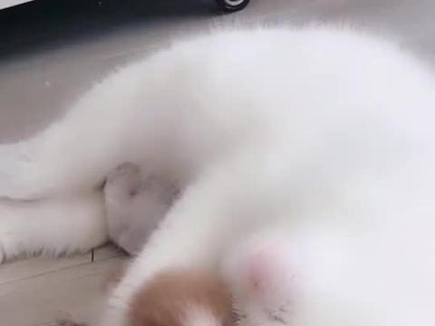 猫咪只生了一个独苗,每天都稀罕的不得了,这绝对是亲妈