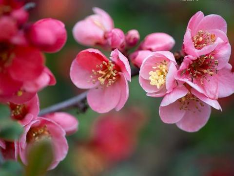 12月份开始,4属相运势转旺,桃花来临,爱情甜蜜,生活无忧