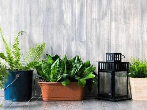 不想植物烂根、黄叶、招惹害虫,就将这2厨房调料捣碎养花!