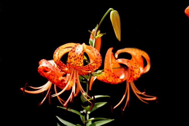 预计12月份,收获惊喜缘分与桃花,爱情降临好运连绵的4大星座