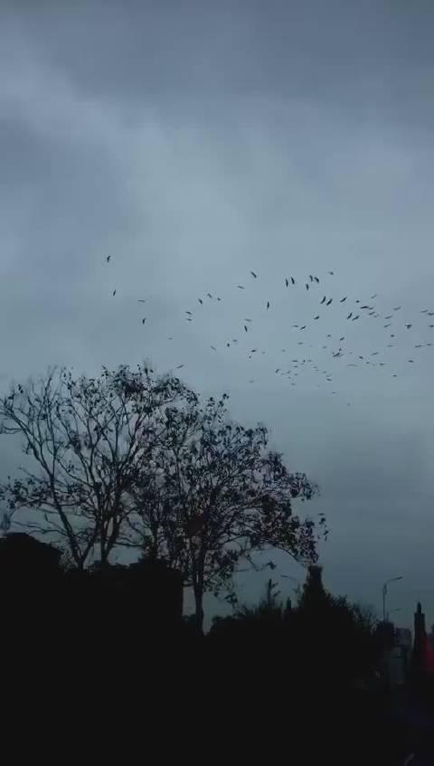 皖南~宣城市郊... 付老湿手法 让我想起了色达天葬台...