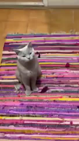等着吃饭饭的猫咪