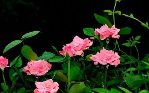 家里的这种垃圾用来养花,效果特别好,冬天又保暖,根系满盆窜