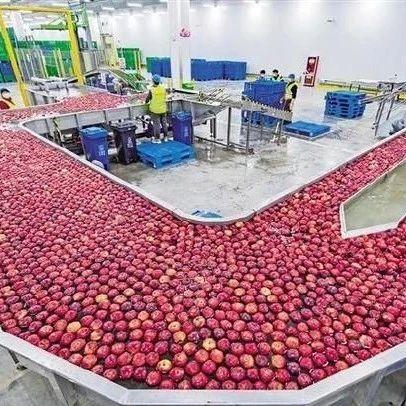 """苹果下广东,荔枝上高原!看陕粤特色农产品""""比翼齐飞"""""""