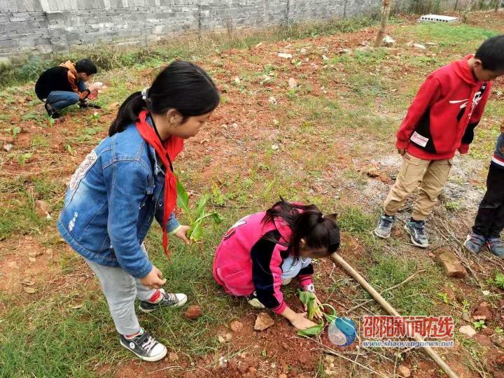 洞口县丰产小学开展社会实践活动,体验劳动教育