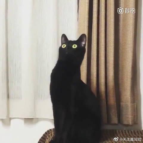 黑猫第一次听马勒音乐,它肯定不知道自又贡献了一波表情包吧...