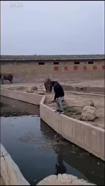 调皮的小象,踩过一次园长的脚,就要永远踩园长的脚