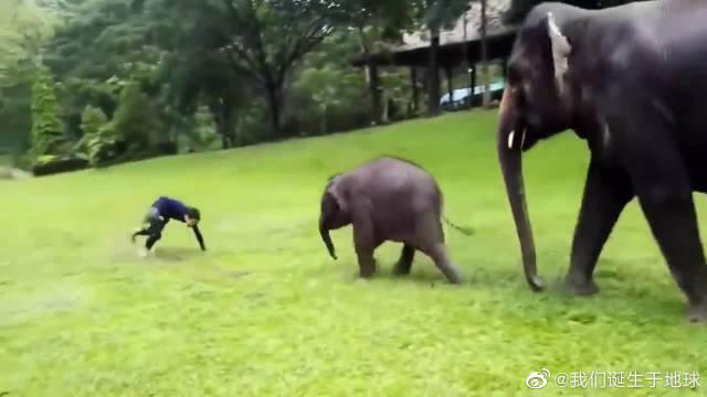 好可爱!小象追着男子玩耍,像个宝宝惹人喜爱