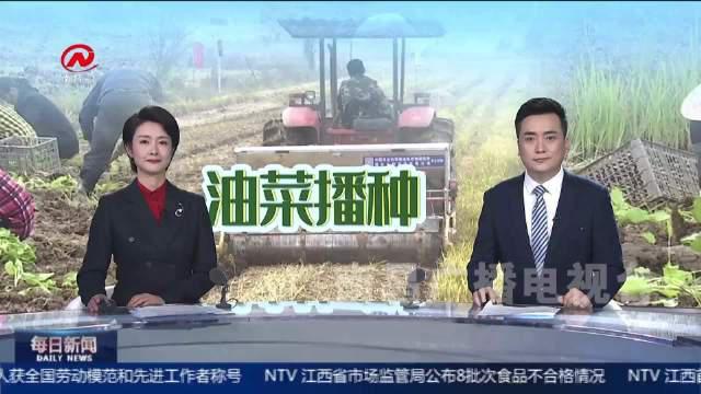 新建区抢种油菜绿色过冬,助农增收又肥田