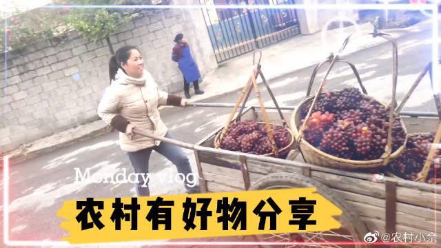 村花推着板车卖葡萄,小商贩满脸笑容,这样场景难得一见,太幸福