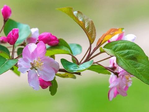 12月份,吉星庇佑,4属相运势提升,桃花朵朵,越来越幸福