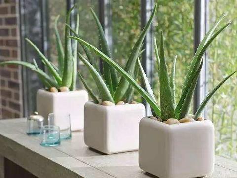 家里万万要养这几种植物,对家人身体健康有益,有钱人一早就明白