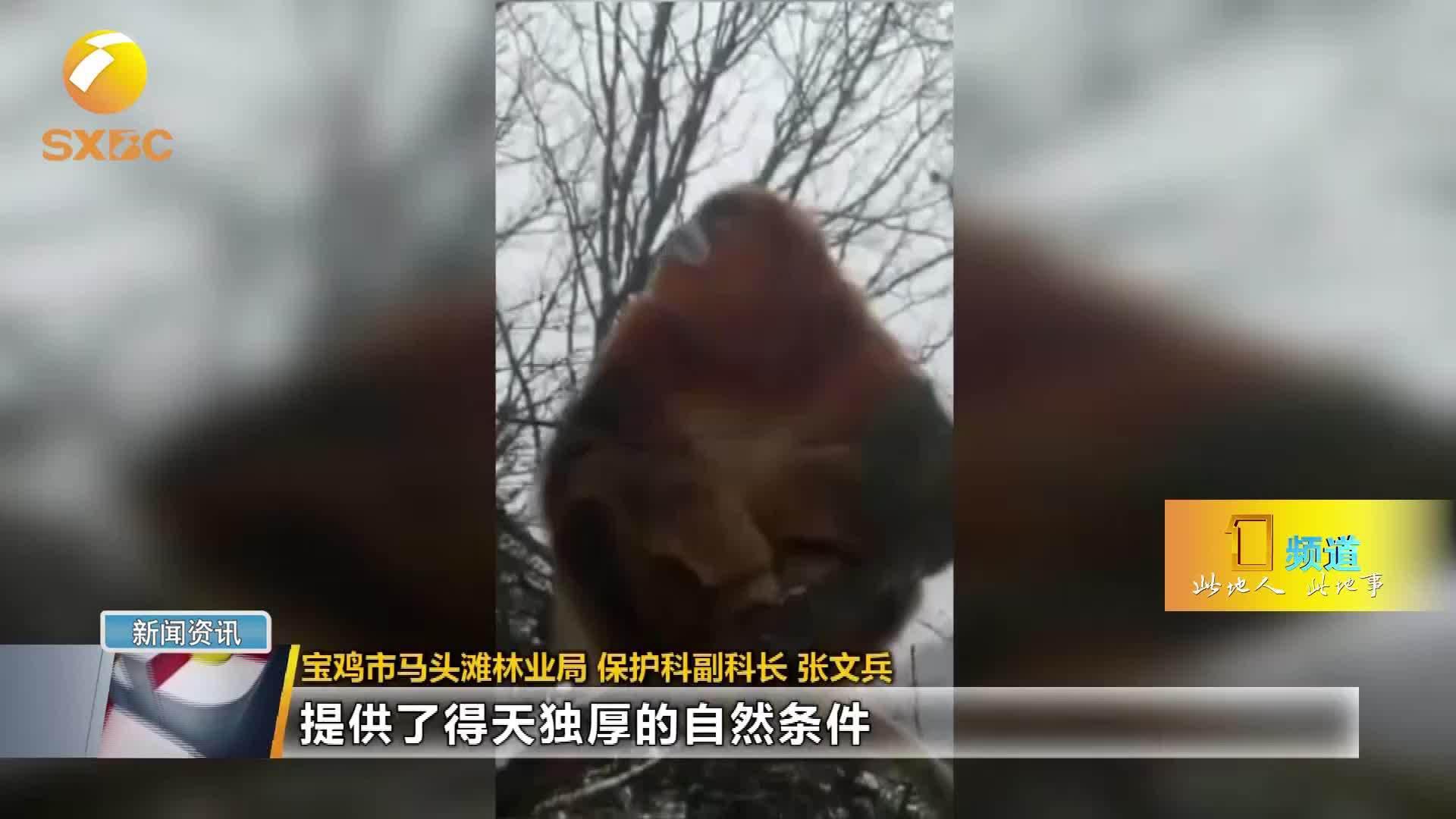 西安今冬初雪退场 陕南未来四天仍有雨雪天气 11月23日…………