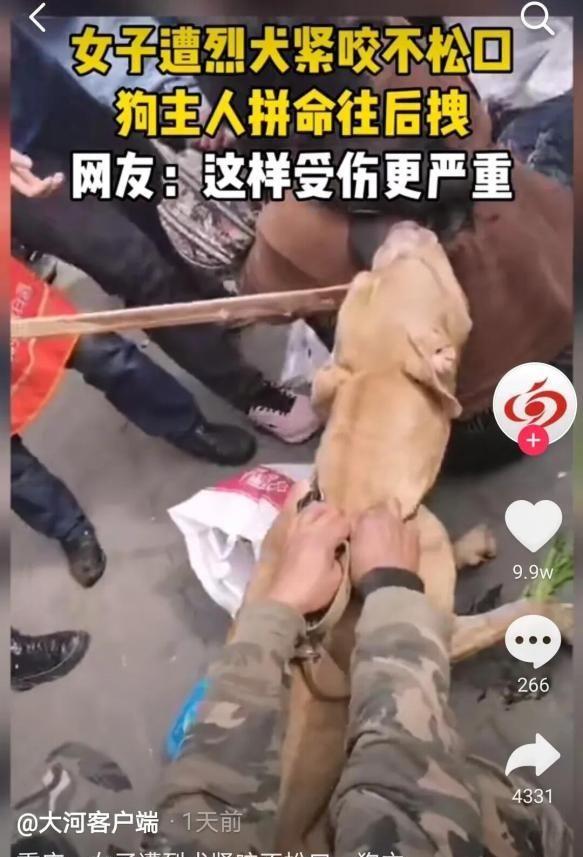 重庆北碚区:一女子被狗紧咬,众人齐拉不松口,城市禁犬可好?