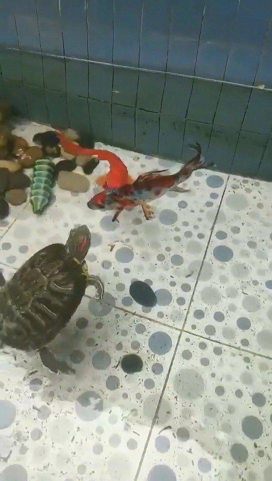 鱼:不听不听,王八念佛