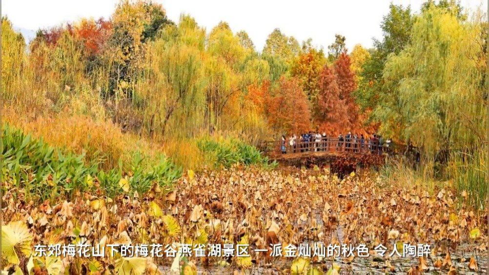 南京梅花谷燕雀湖秋景醉美