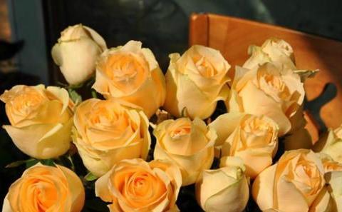 此花高贵典雅,好养花期长,开花颜值高,是阳台盆栽佳品