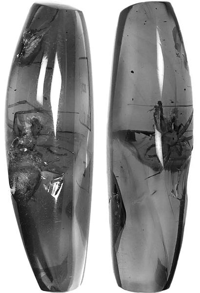 科研人员从琥珀中发现两蜘蛛新科