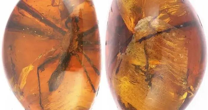近1亿年前的灭绝蜘蛛