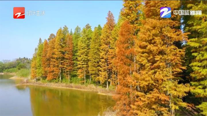 秋冬交替美好景色