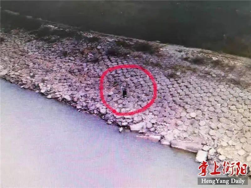 禁渔期内非法电鱼,衡山一男子被采取刑事强制措施