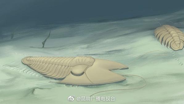 南京地质古生物研究所为寒武纪三叶虫家族又添一新成员:5亿年前……