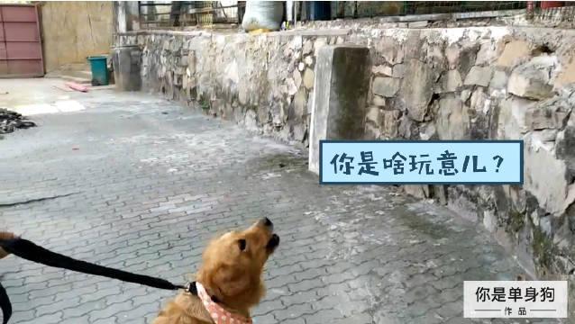 狗生第一次去动物园什么体验