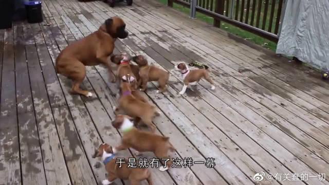 狗生最绝望时刻!被一群娃追赶,甩都甩不掉