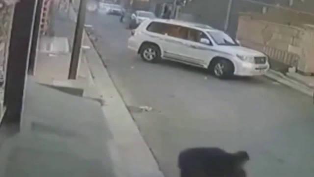 男子被大狗追赶,下一秒做法惊呆了…………