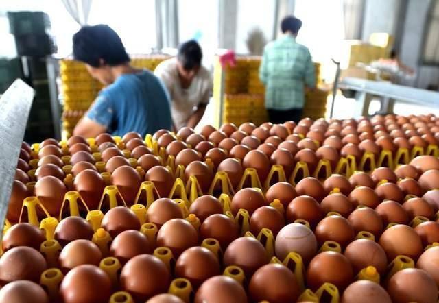 蛋价同比跌30%,产量减少,蛋农持续亏损,12月份有转机吗?