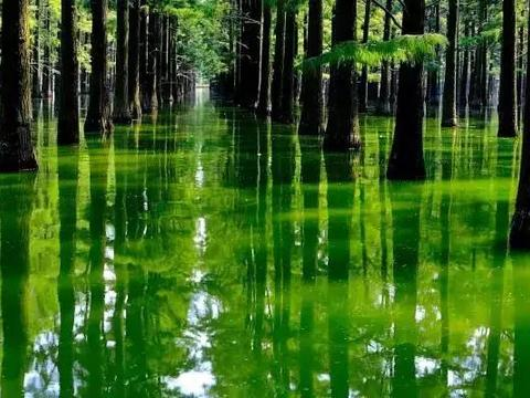 男子旅游时,发现树林里许多人在划船,定睛一看让人哭笑不得