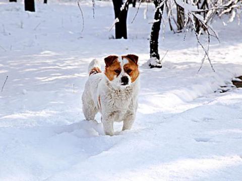 生肖狗:老天为你准备了一个大喜宴,你家有属狗的吗?