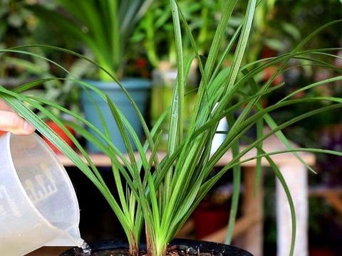 春天养兰花,给它做好4件事,植株长势旺盛