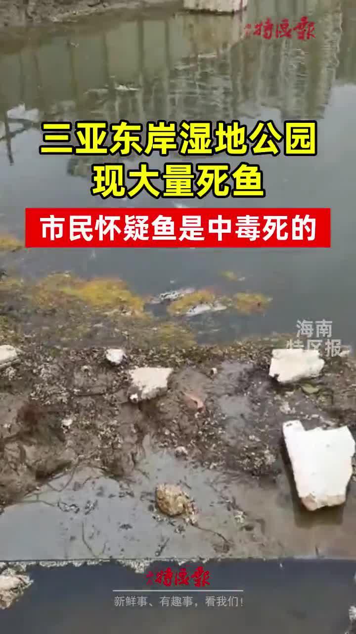 三亚东岸湿地公园现大量死鱼!……