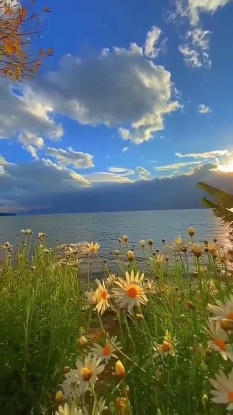 大理洱海,这景色简直就像画里一样,太美了