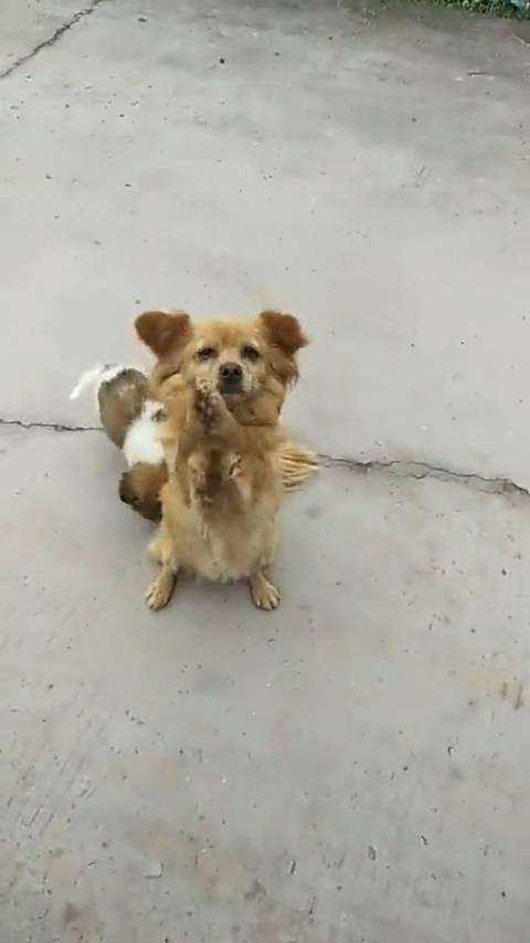 流浪狗狗为了狗崽,在路边讨食,真是可怜啊!